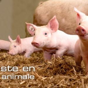 evagri 35 nutrition animale